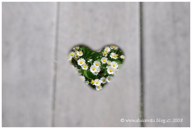 srdce sedmikrásky