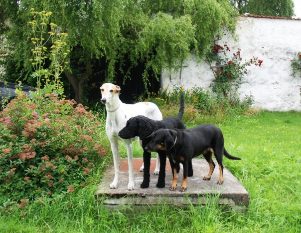 naše psí smečka