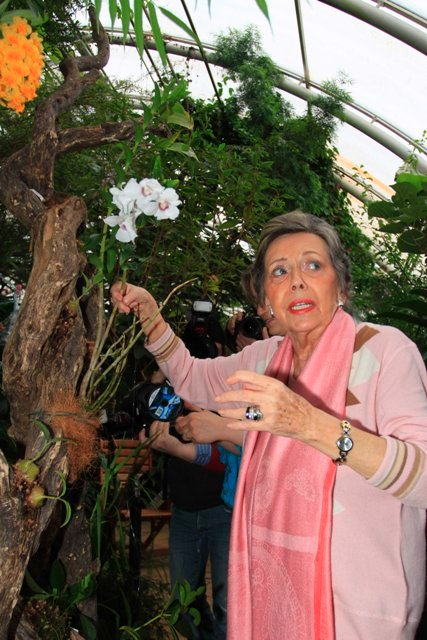 Orchidej a paní Jiřina Jirásková