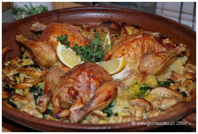 jarní kuřátka v nádivce