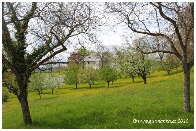 Svycarsko Dornach, louky u Goetheana