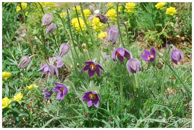 Svycarsko rozkvetla louka u Goetheana