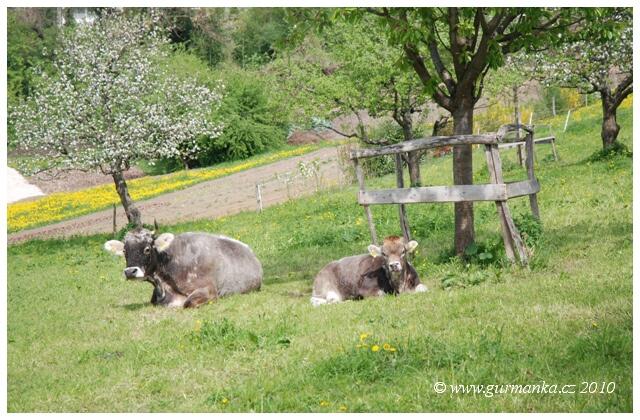 pastvina u Goetheana Dornach