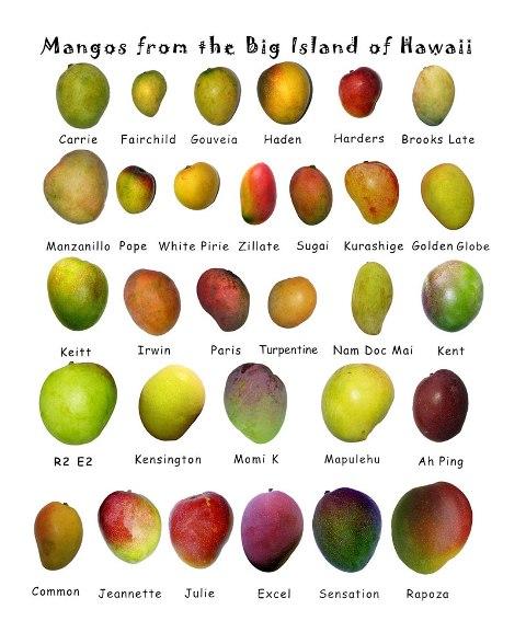 mango - tvary a odrudy