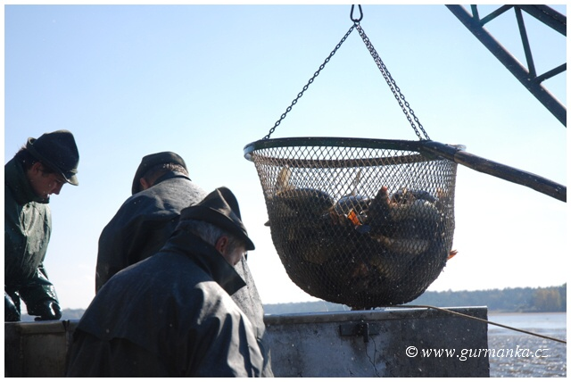 """jihočeské rybníky - rybáři - ryby - výlovy - chov kapra"""