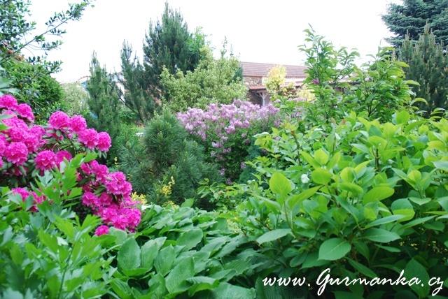 moje zahrada v obytném dvoře